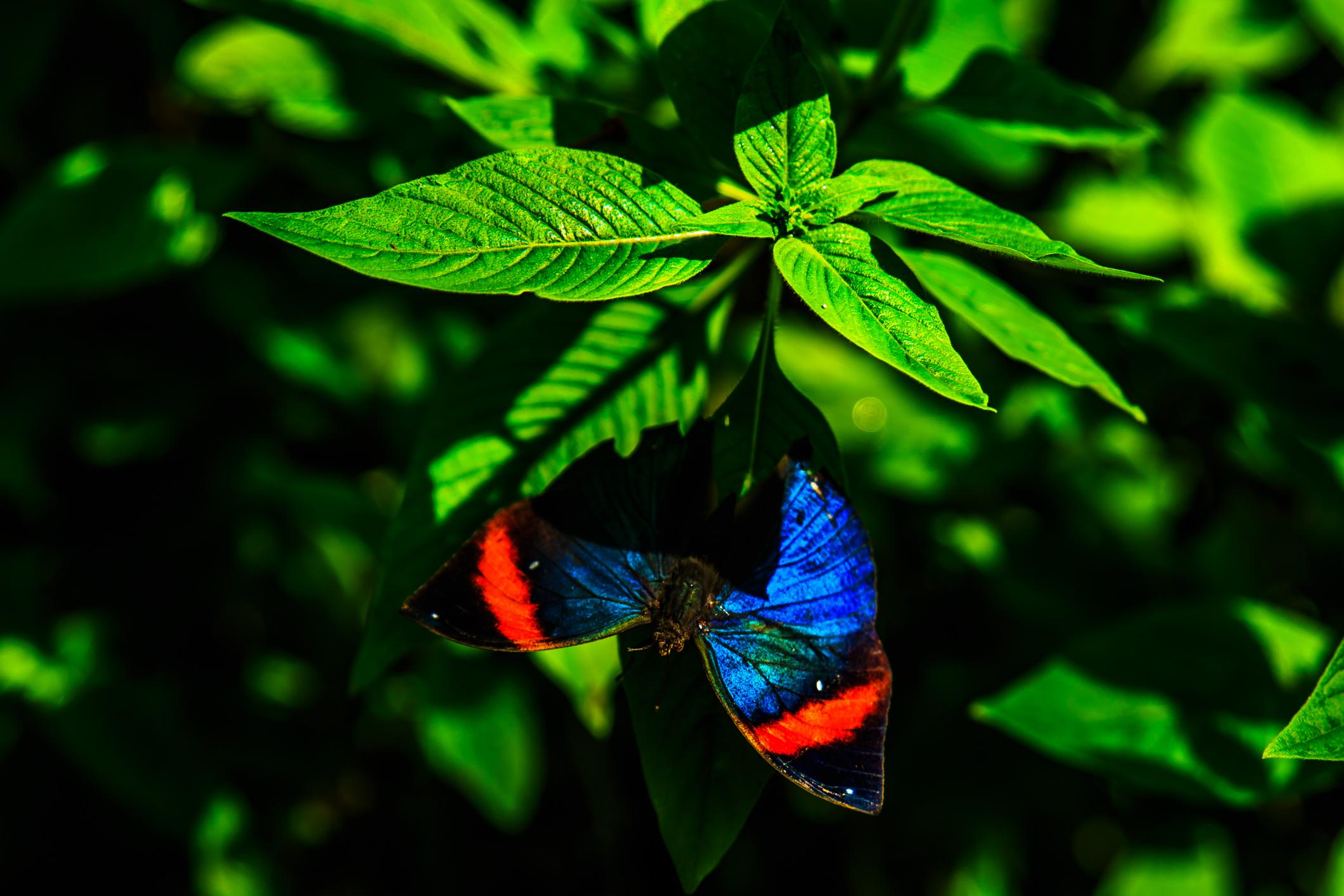 File:Miami   Fairchild Tropical Botanic Garden   In The Butterfly Garden  (12259861293)