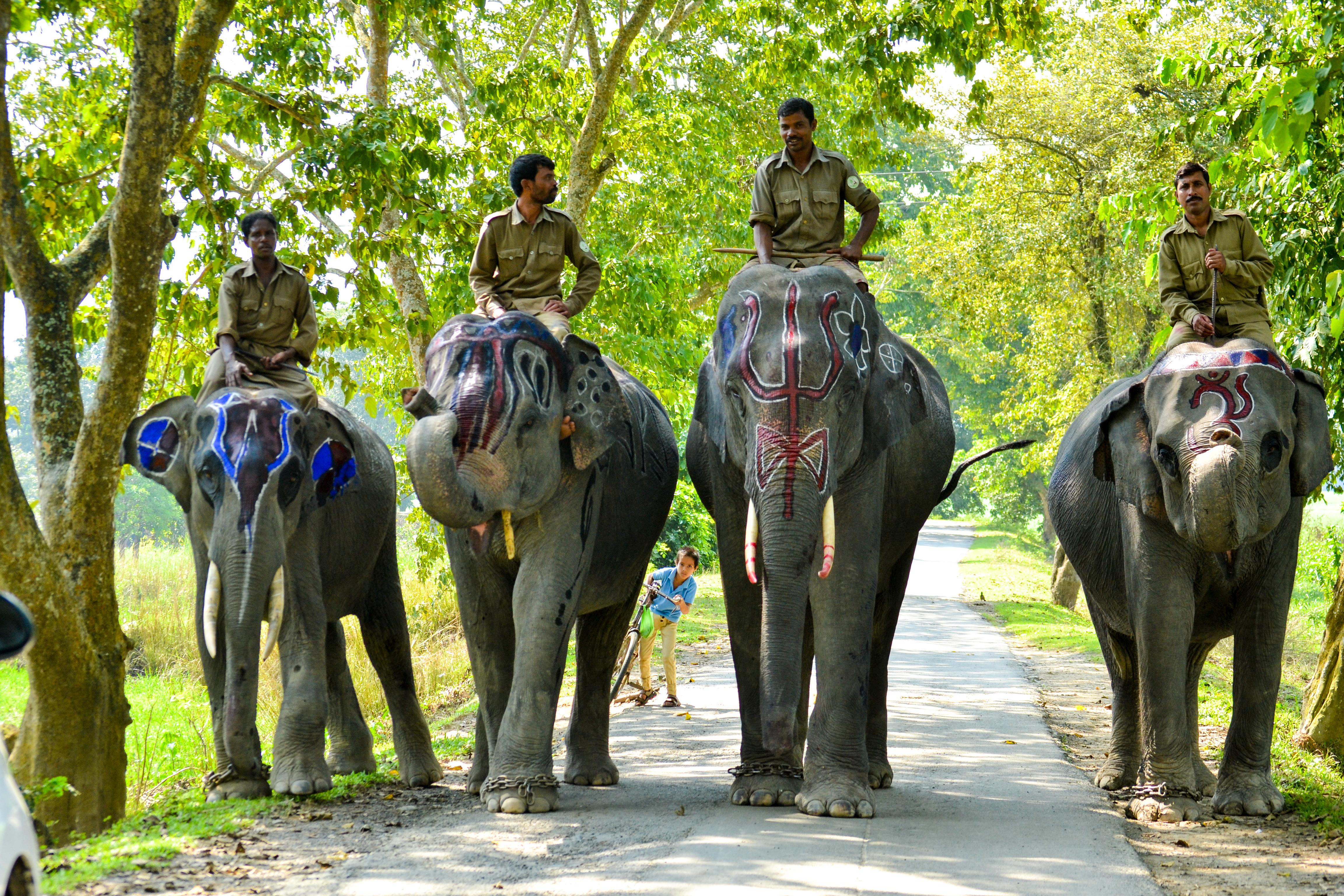 Kaziranga National Park- Assam