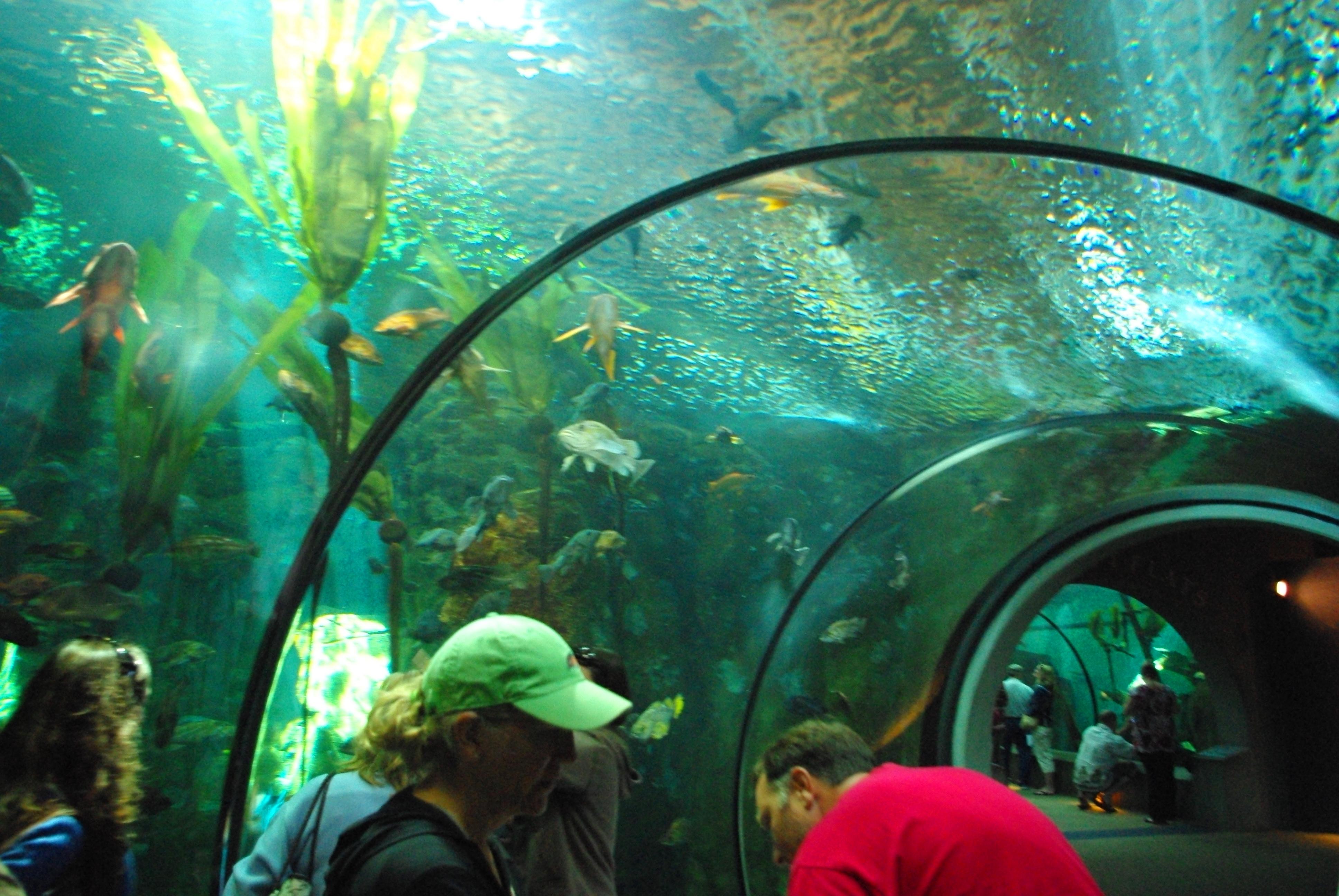 Image Result For Oregon Coast Aquarium