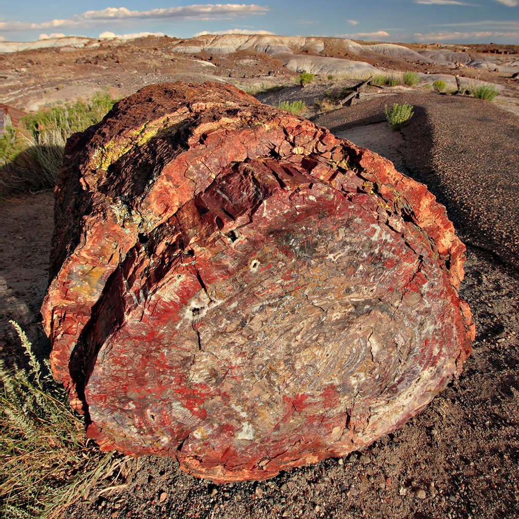 Description petrified forest log 2 md