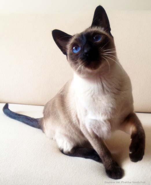Elegant Cat Breeds