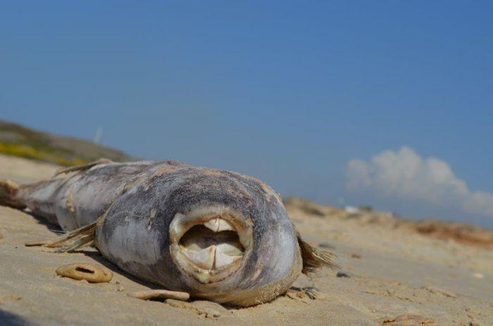 מרכז להצלת צבי ים במכמורת
