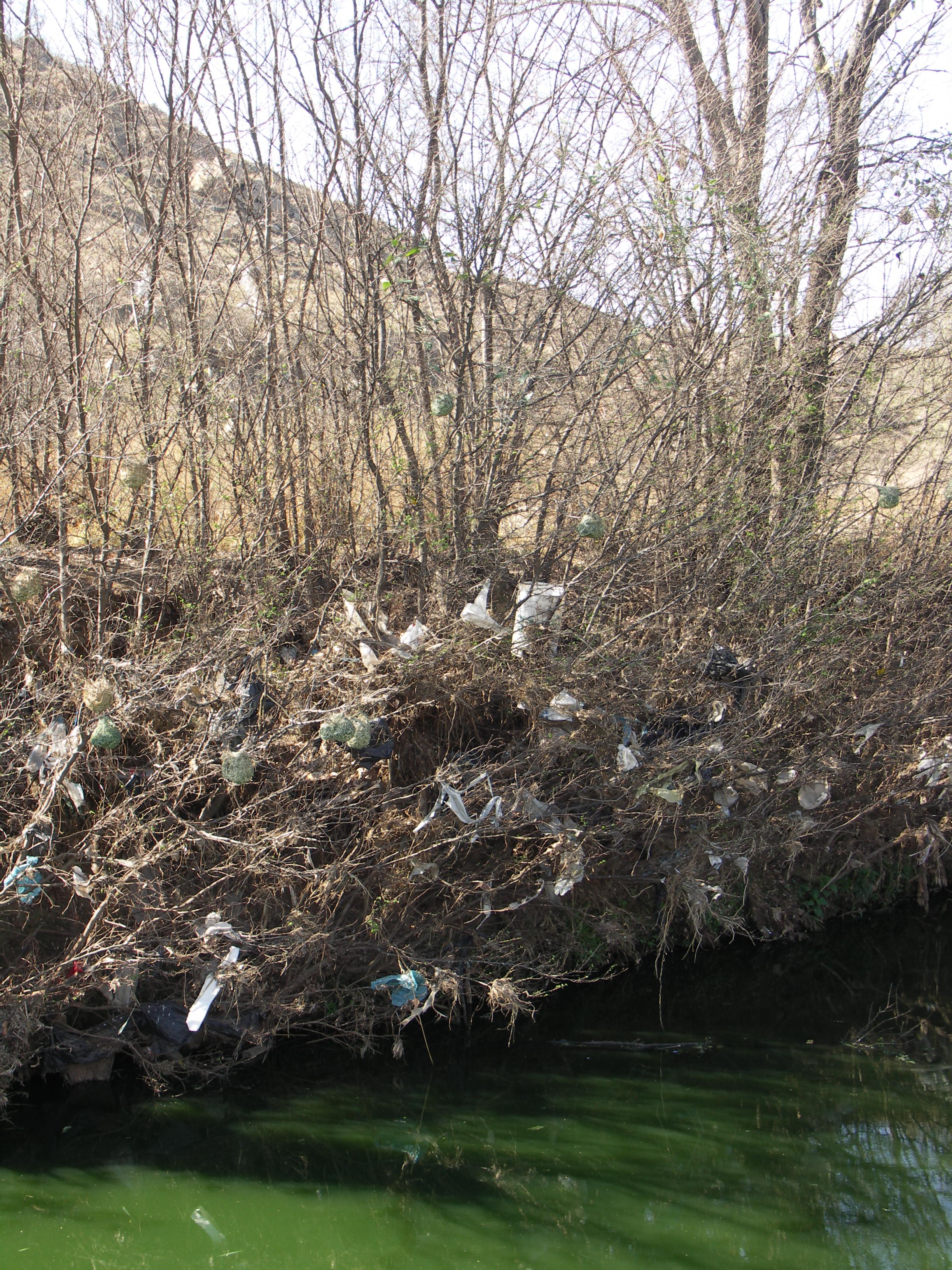Plastic bag history - File Plastic Bag Litter 001 Jpg