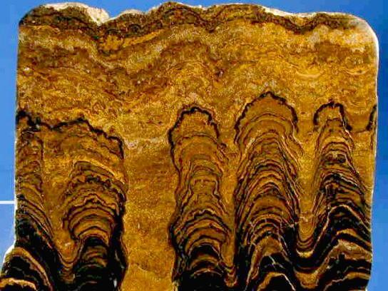 [Image: Proterozoic_Stromatolites.jpg]