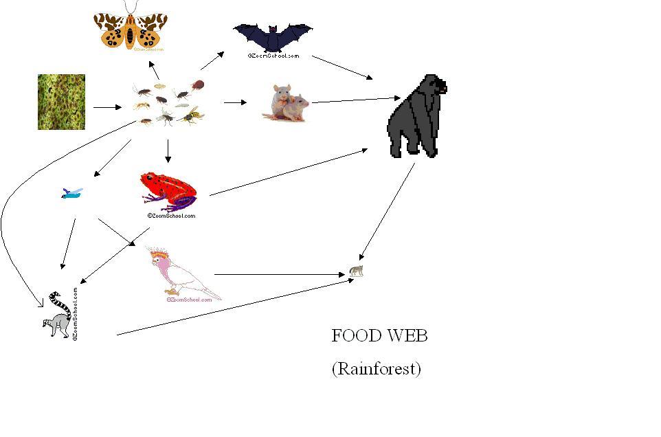 Gorilla Food Chain