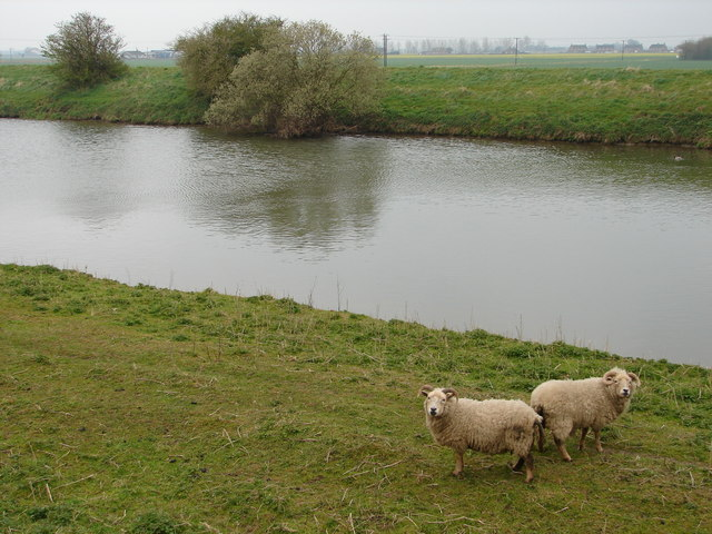Sheep May Safely Graze - geograph.org.uk - 771637