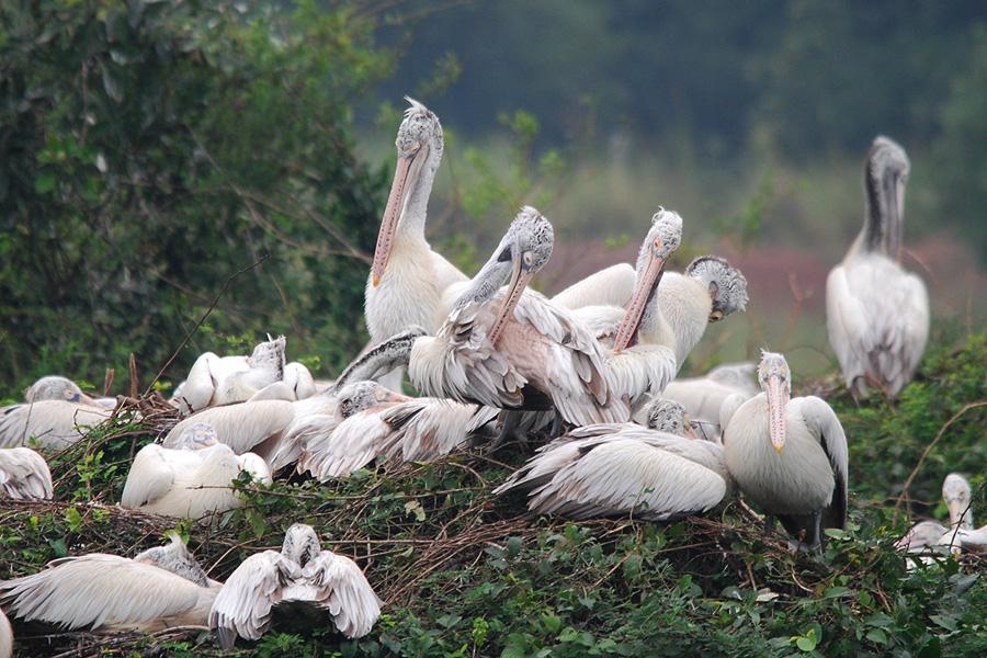 Nelapattu Bird Sanctuary - Wikipedia