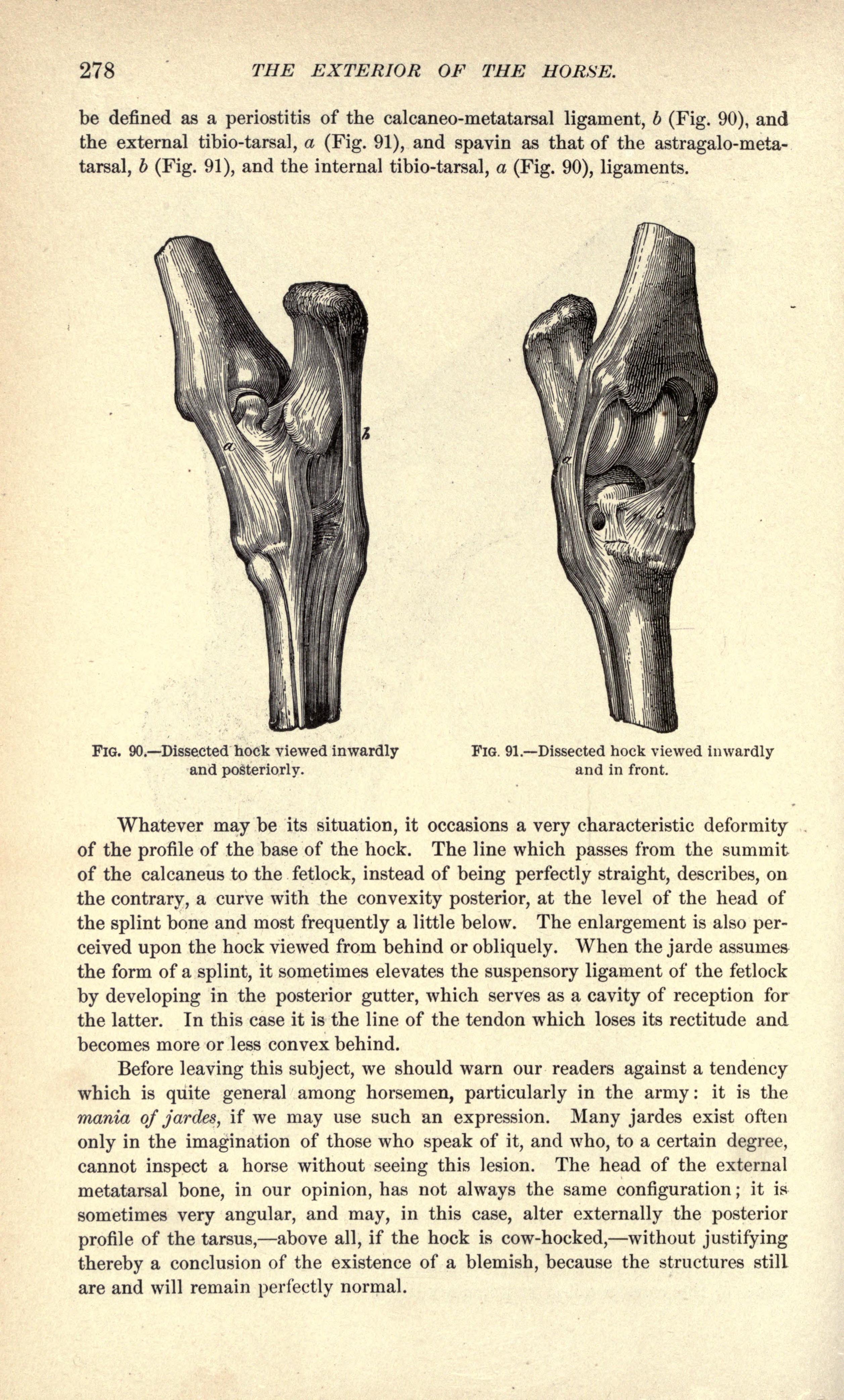 Dorable Hock Horse Anatomy Ornamento - Anatomía de Las Imágenesdel ...