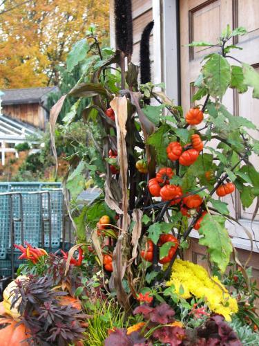 Um exemplo de jardim pequeno