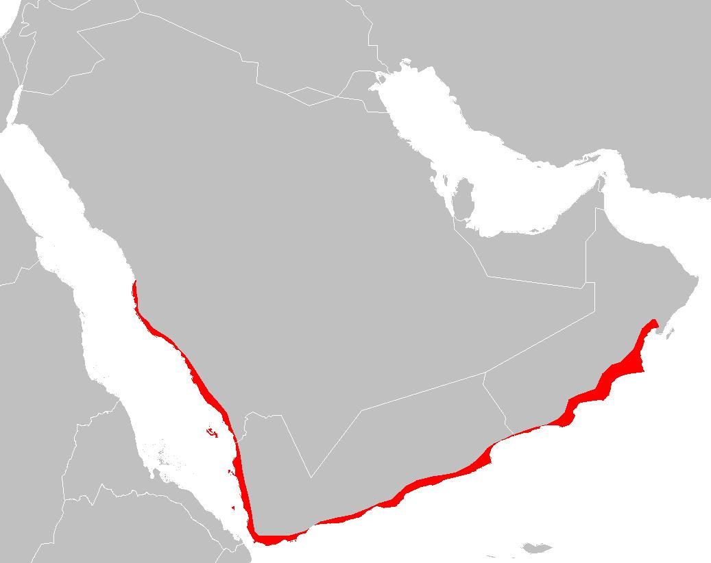 Picture of: Arabian Peninsula Coastal Fog Desert Wikipedia