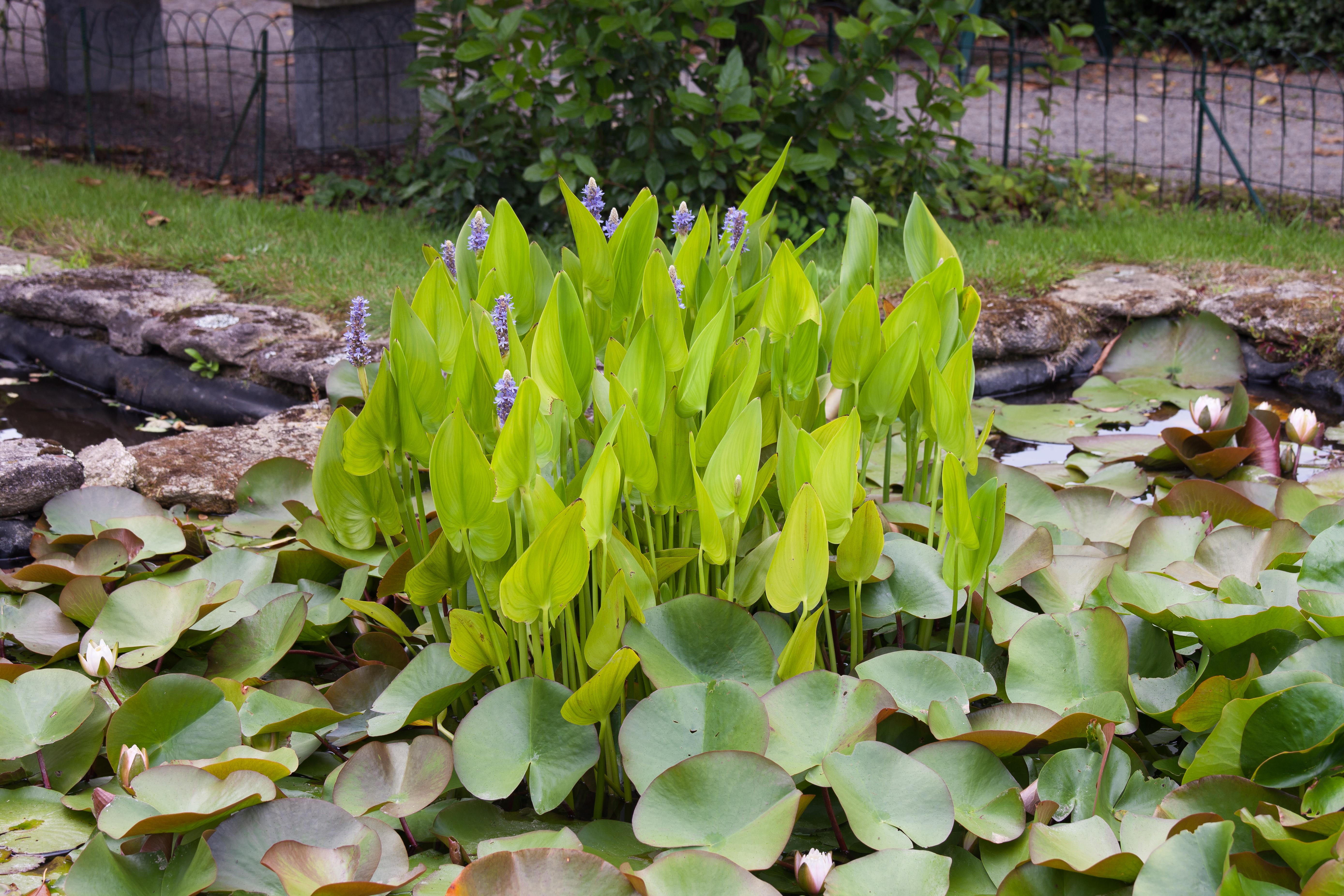 Plantas De Interior Plantas Medicinales Tipos De Plantas  Share The