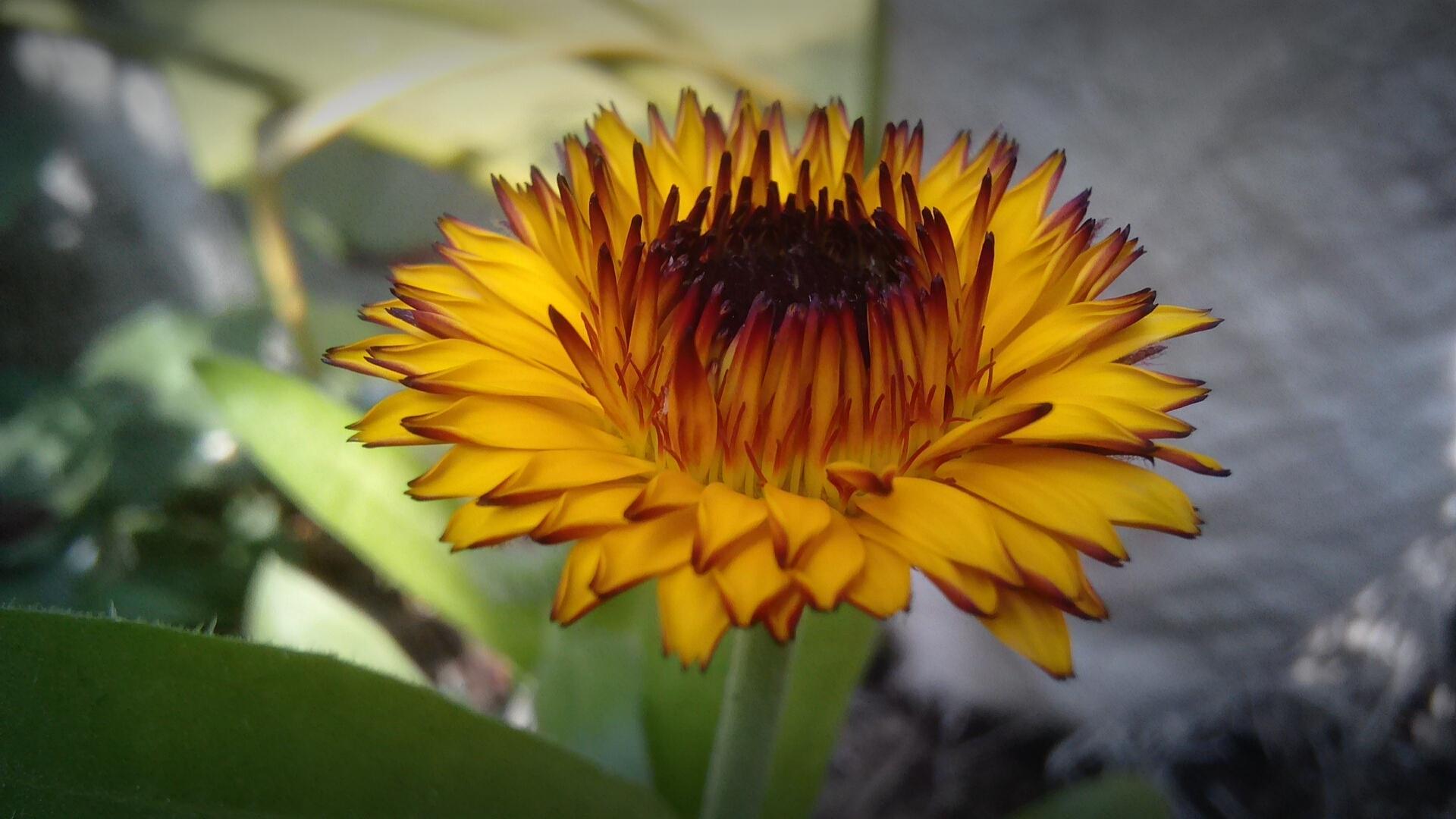 Filea very beautiful flowerg wikimedia commons filea very beautiful flowerg izmirmasajfo