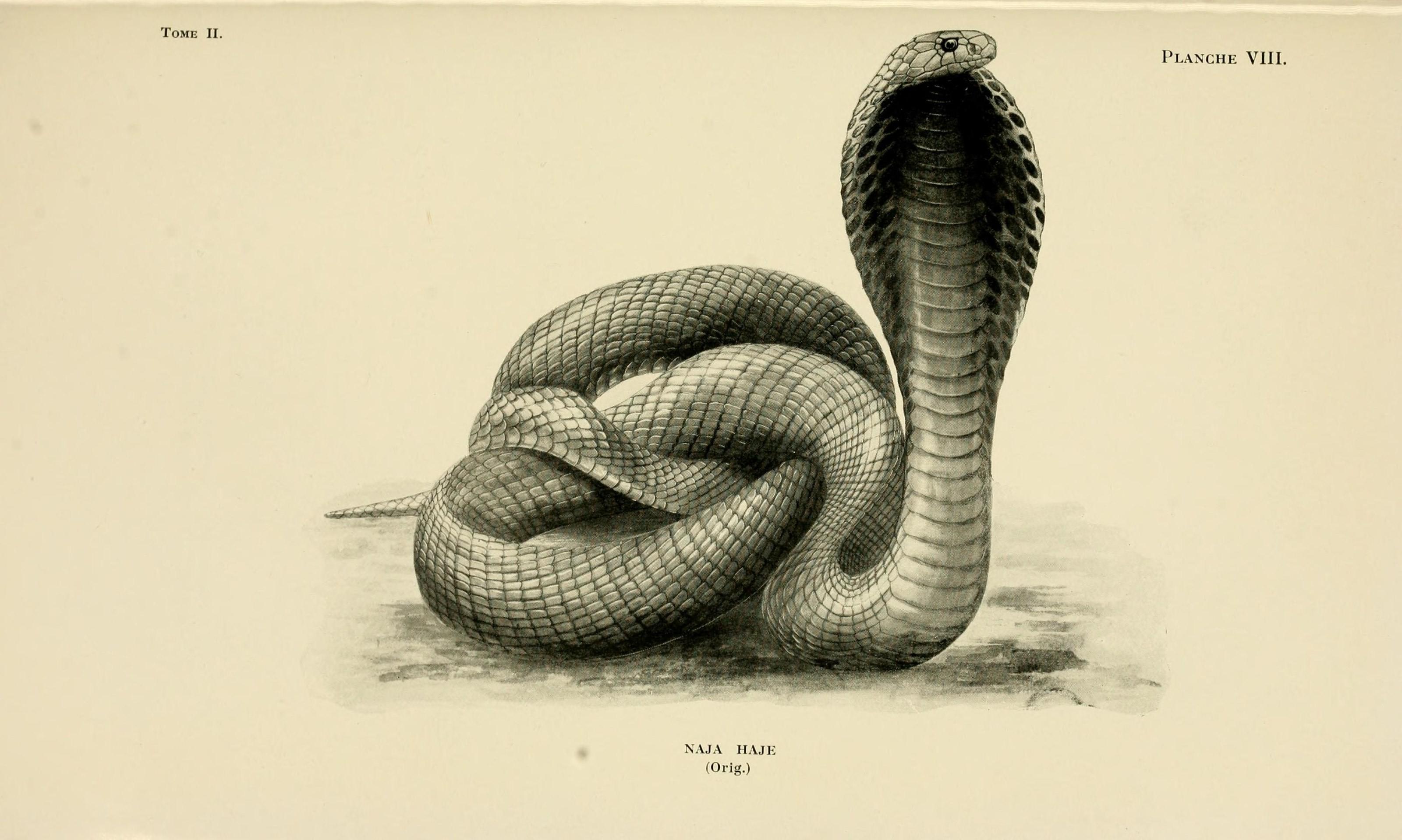 Animaux venimeux et venins- la fonction venimeuse chez tous les animaux (Pl. VIII) (7461657652).jpg
