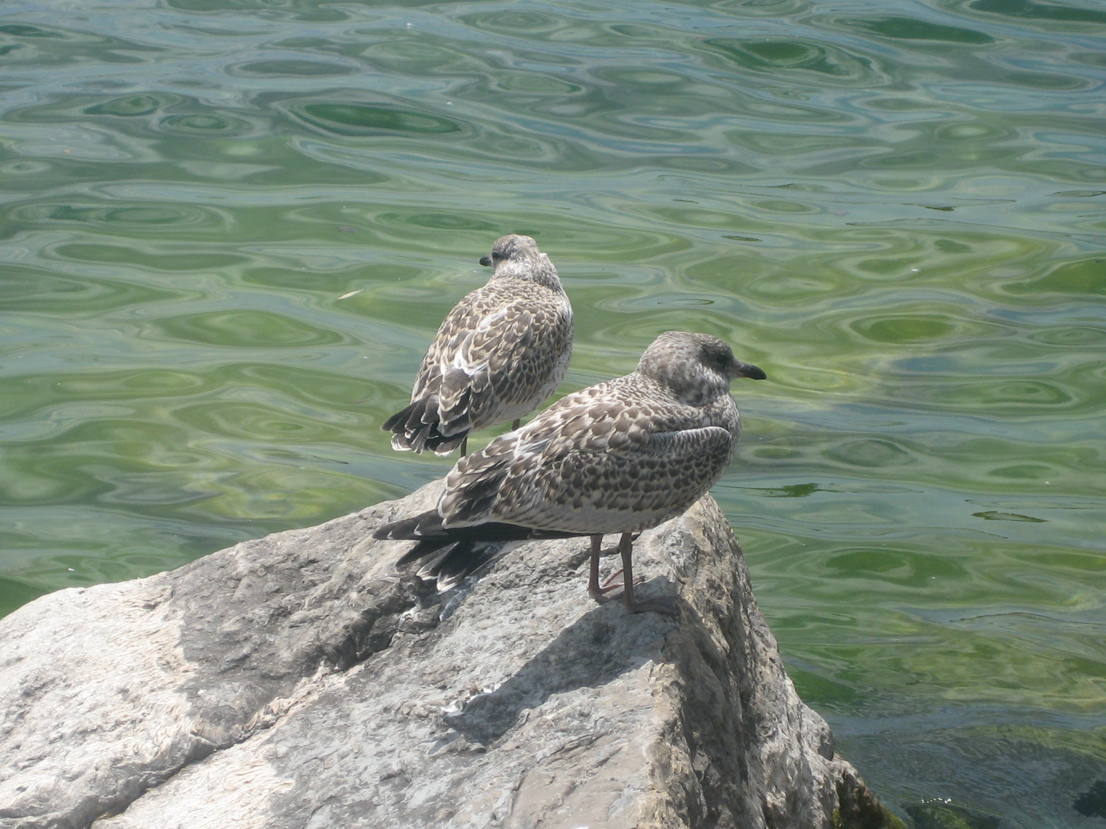 file bird on rocks near shoreline jpg wikimedia commons