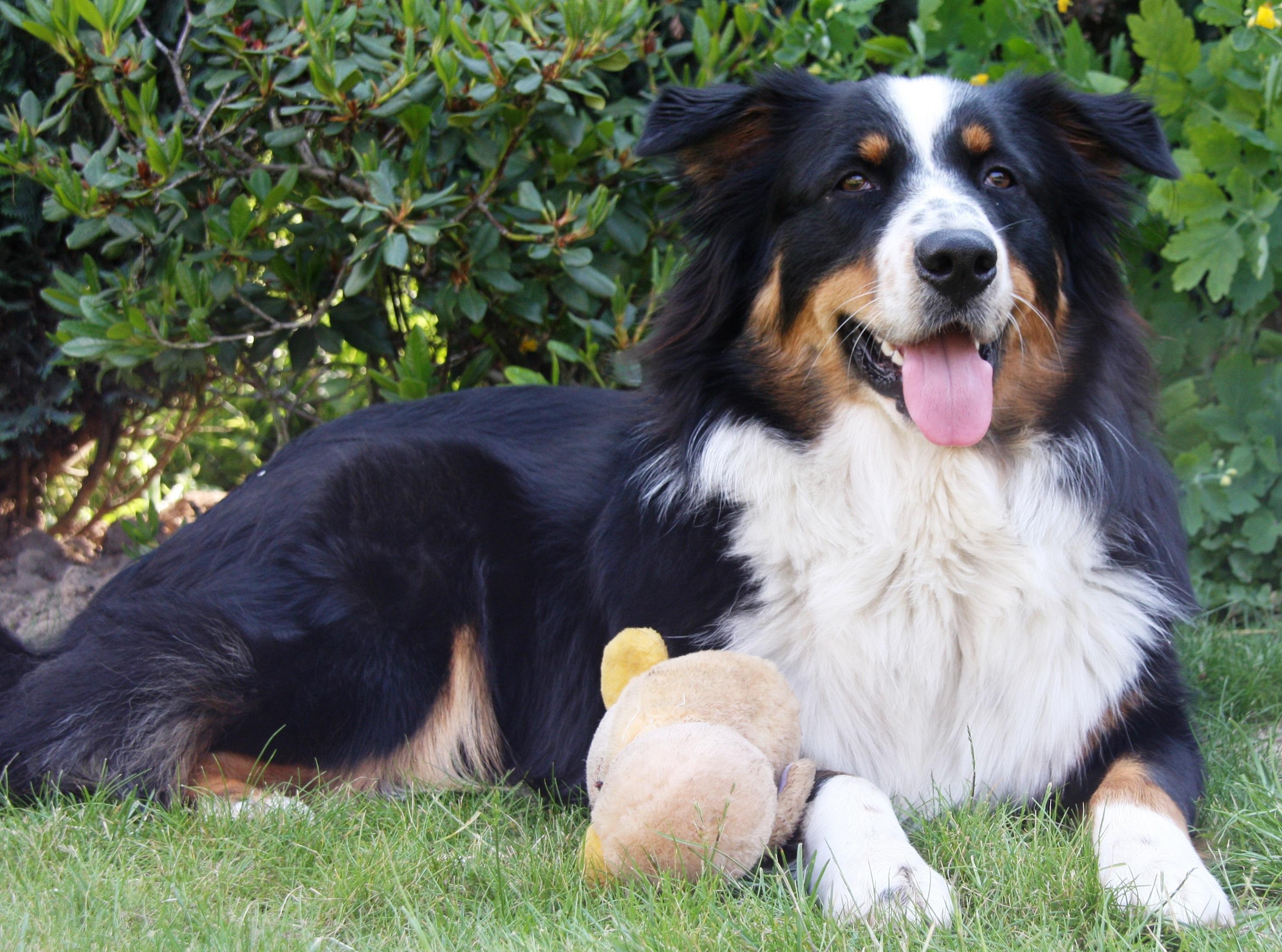 Best Adult Dog Food German Shepherd