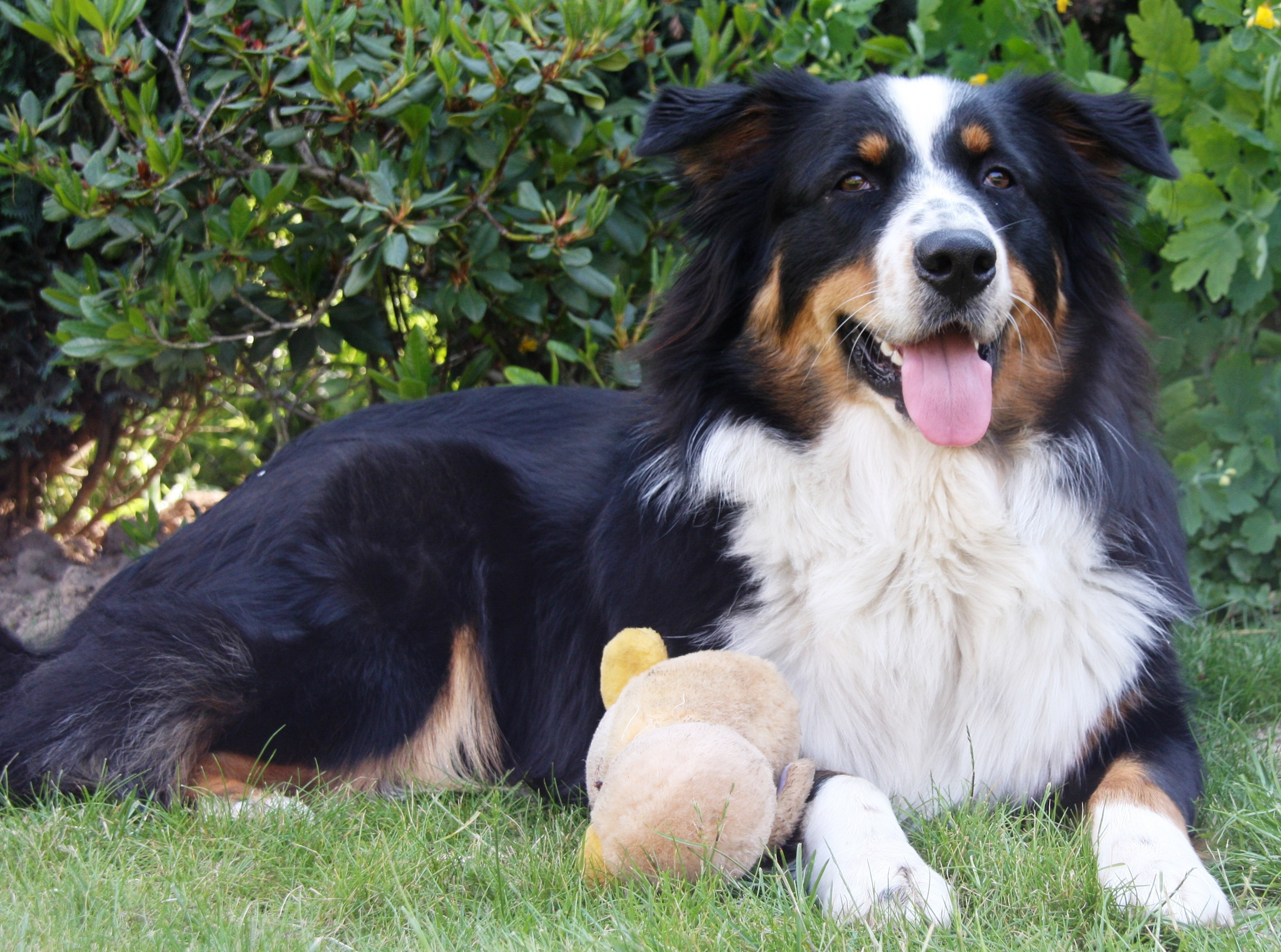 Best Medium Sized Family Dogs