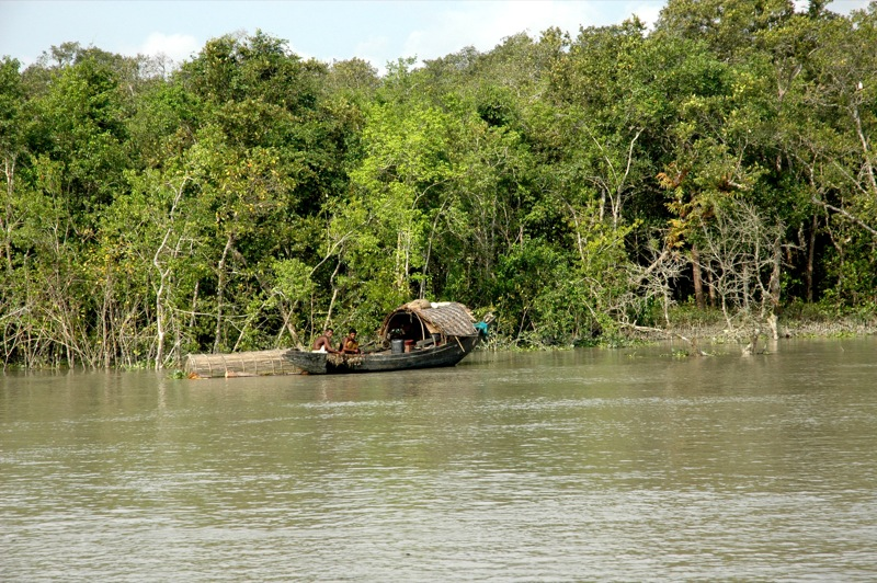 Boat, trees and water in Sundarbans