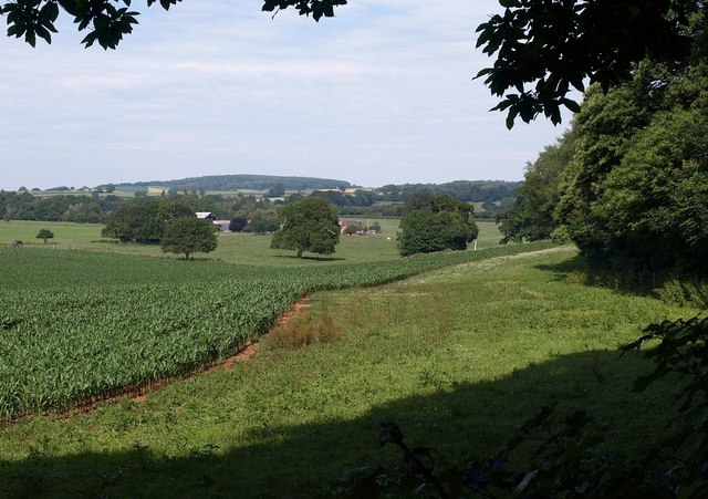 By the edge of Broadley Coppice - geograph.org.uk - 1386141