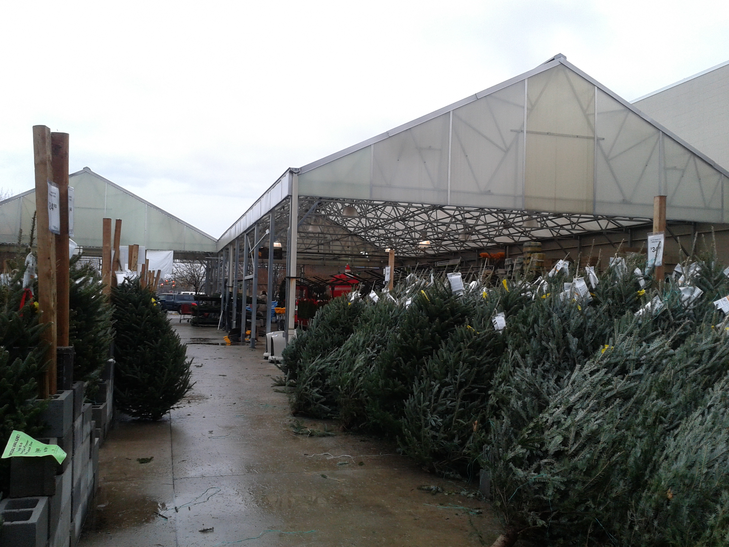 Christmas Tree Lot At Lowes