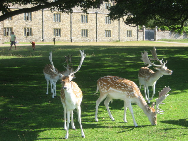 Deer in front of Knole Park - geograph.org.uk - 1451418