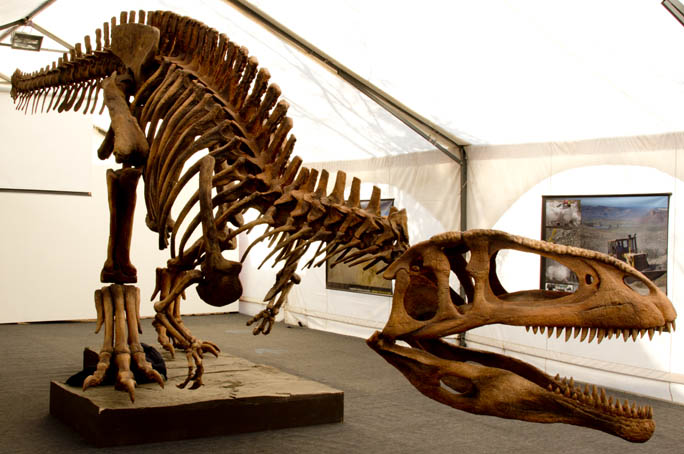 Dinosaurios los gigantes argentinos.jpg