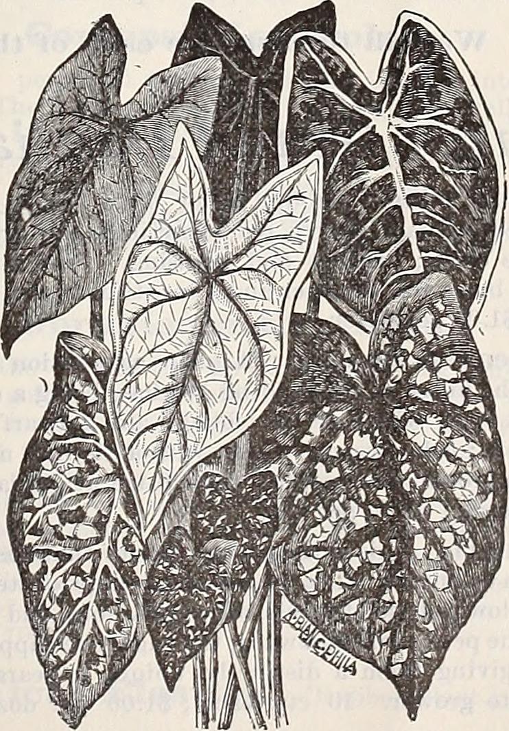 (Plants) Catalogs; Flowers Seeds Catalogs; Vegetables Seeds Catalogs; Gardening Equipment and supplies Catalogs; Nurseries (Horticulture) Catalogs Publisher: