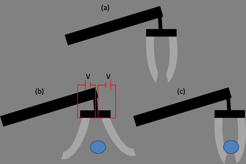 Electroactive Polymers Wikipedia