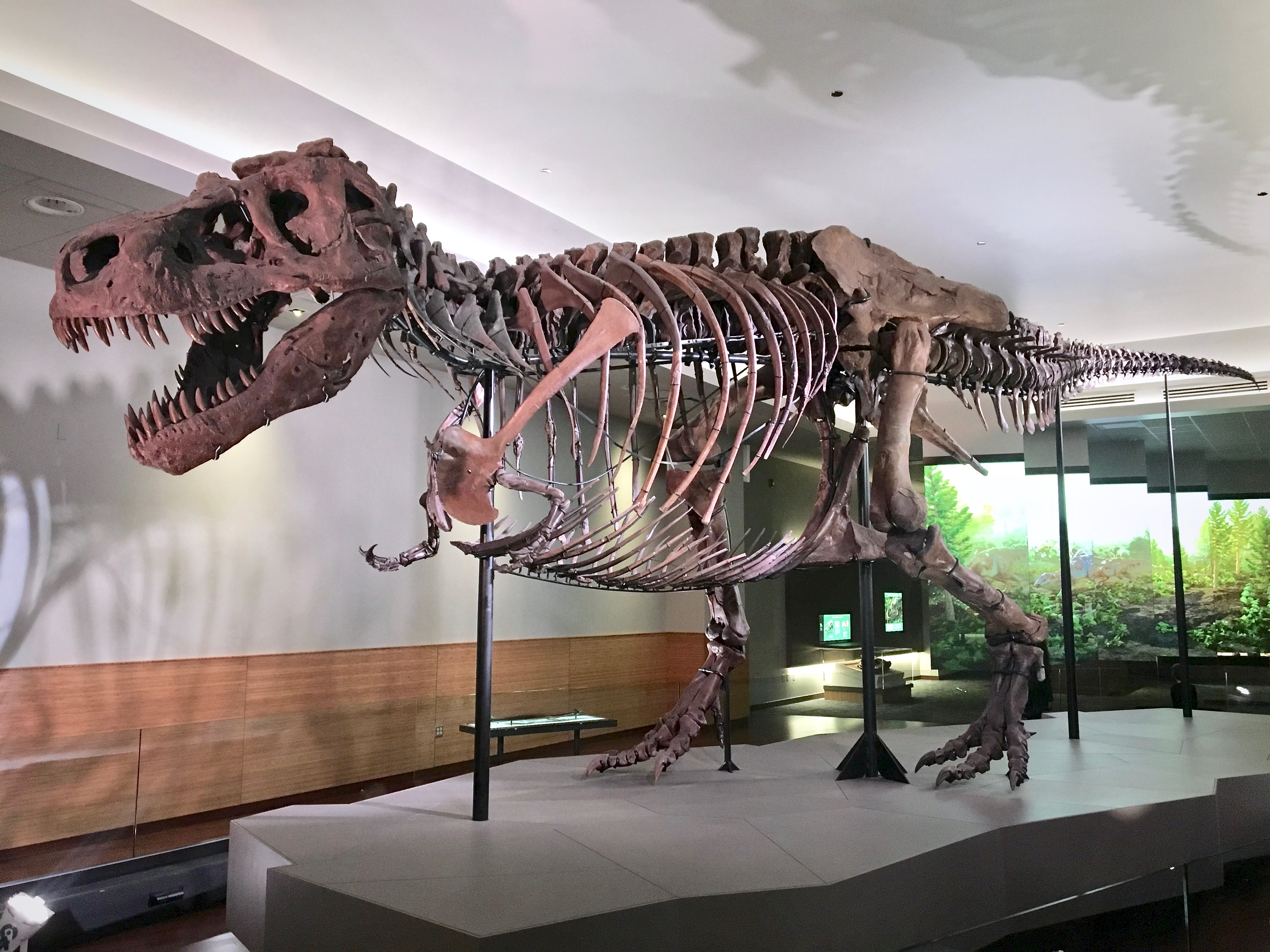 Image result for sue the t rex