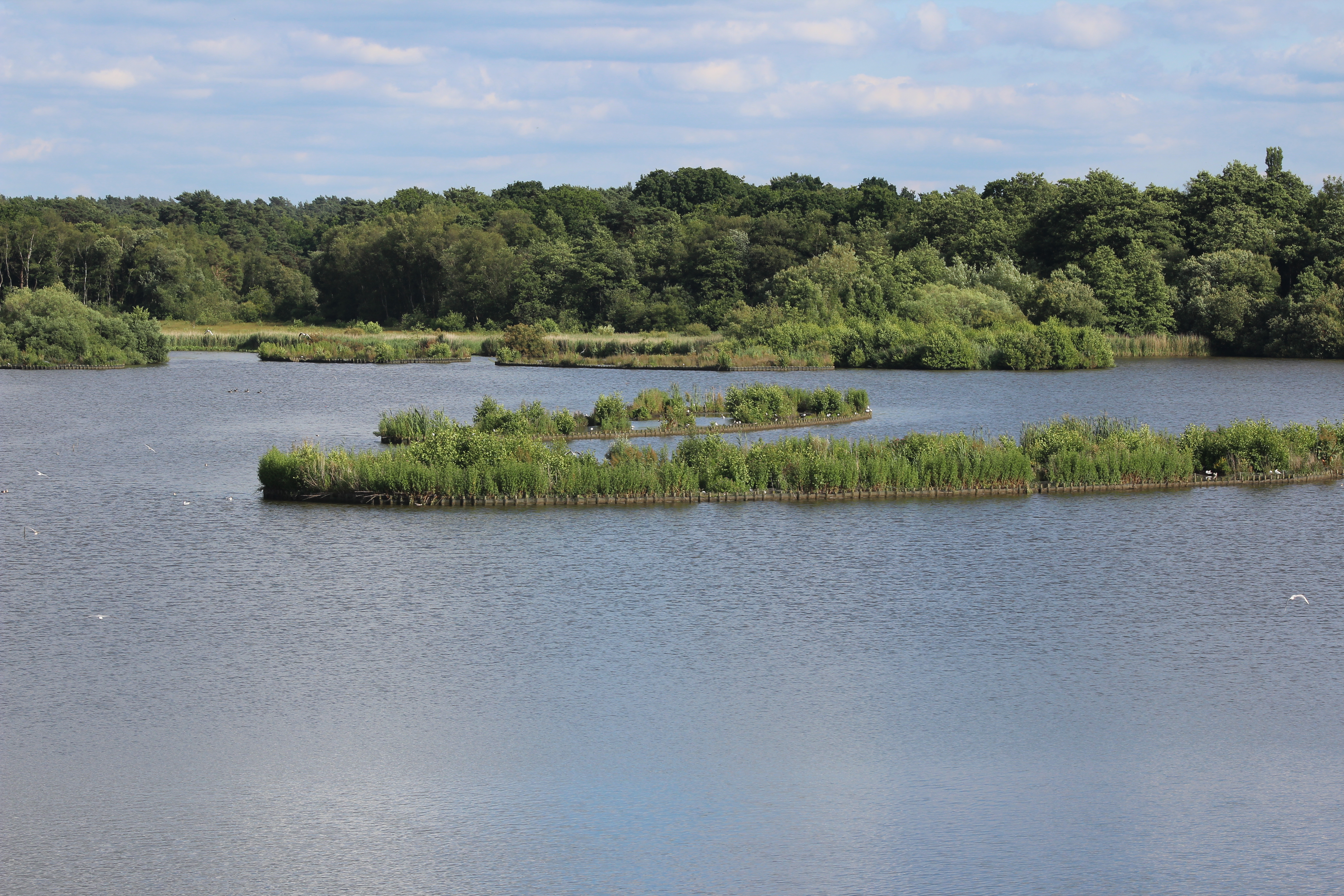 FleetPond ReedBed 3.jpg English: Artificial island reedbeds in Fleet Pond, Fleet, Hampshire. These islands were created to provide a new habitat