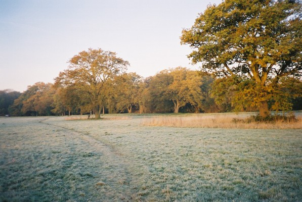 Frosty morning, Maidenhead Thicket - geograph.org.uk - 78545