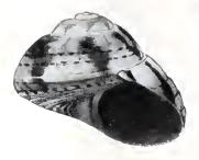 Медуза[3]
