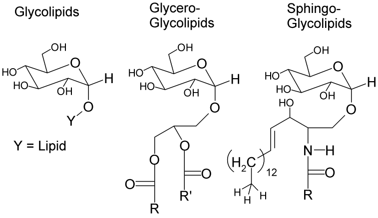 Slika:Glycolipids.png