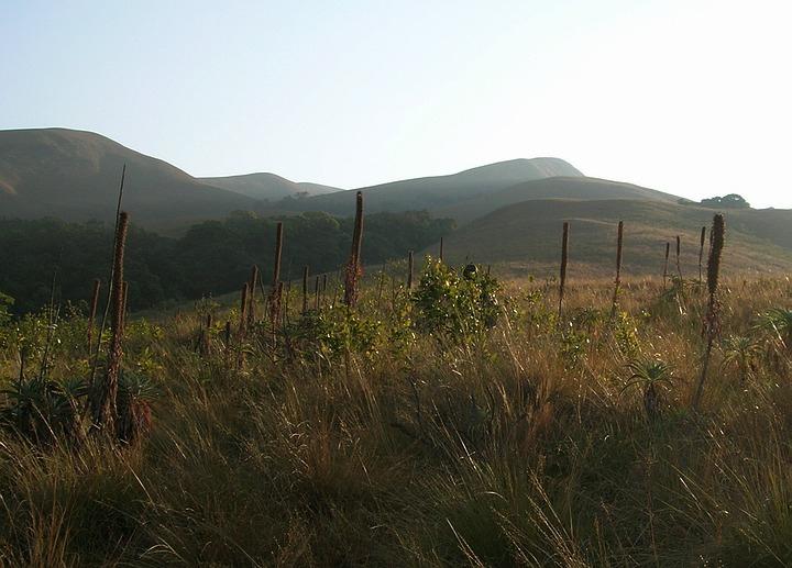 ~ Om Numoorislätten ~ Grass_Hills_National_Park