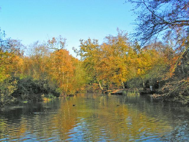 Knighton Woods Pond - geograph.org.uk - 43549