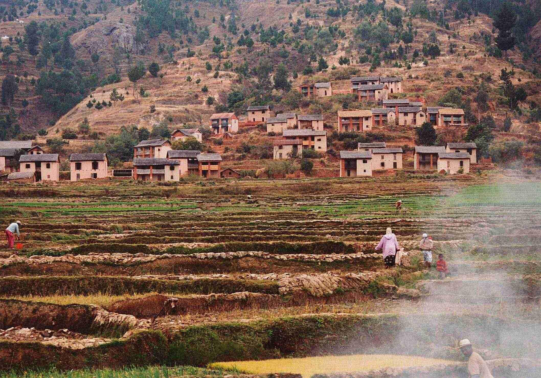 Risaie nella provincia di Antananarivo
