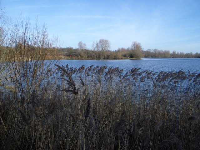 North-western Shoreline in Harrold Odell Country Park - geograph.org.uk - 322086
