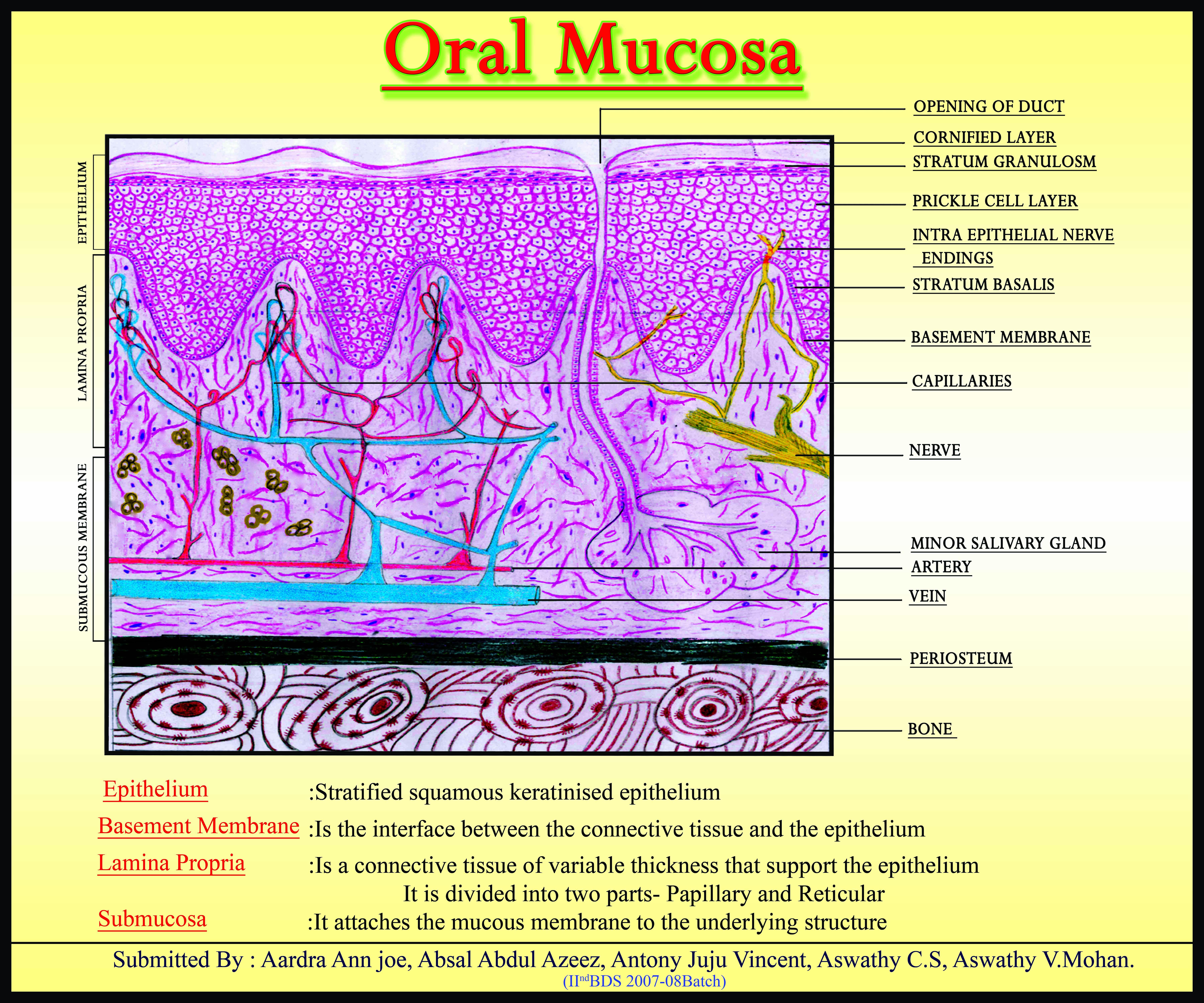 Normal Oral Mucosa 15