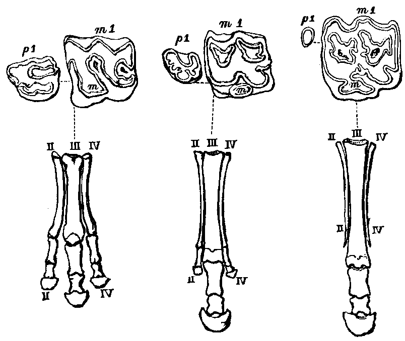 http://upload.wikimedia.org/wikipedia/commons/5/58/Owens_-_On_the_Anatomy_of_Vertebrates.png