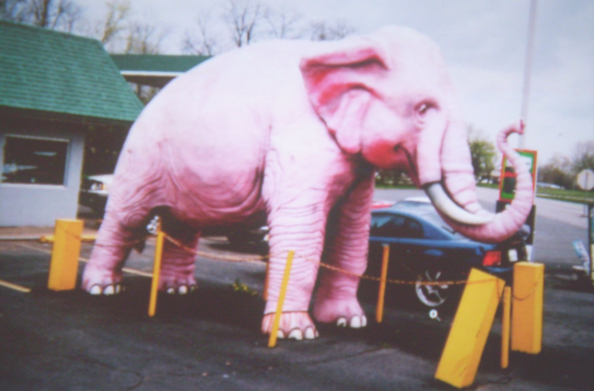 The Pink Elephant in the Room. (By RANDY PRITCHETT [Public domain], via Wikimedia Commons)