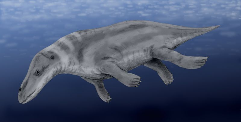 Rhodocetus BW