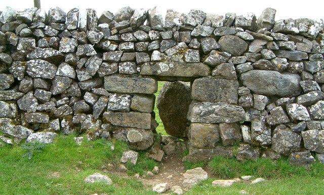 Sheep creep near the Roman camp on Mastiles lane - geograph.org.uk - 174506