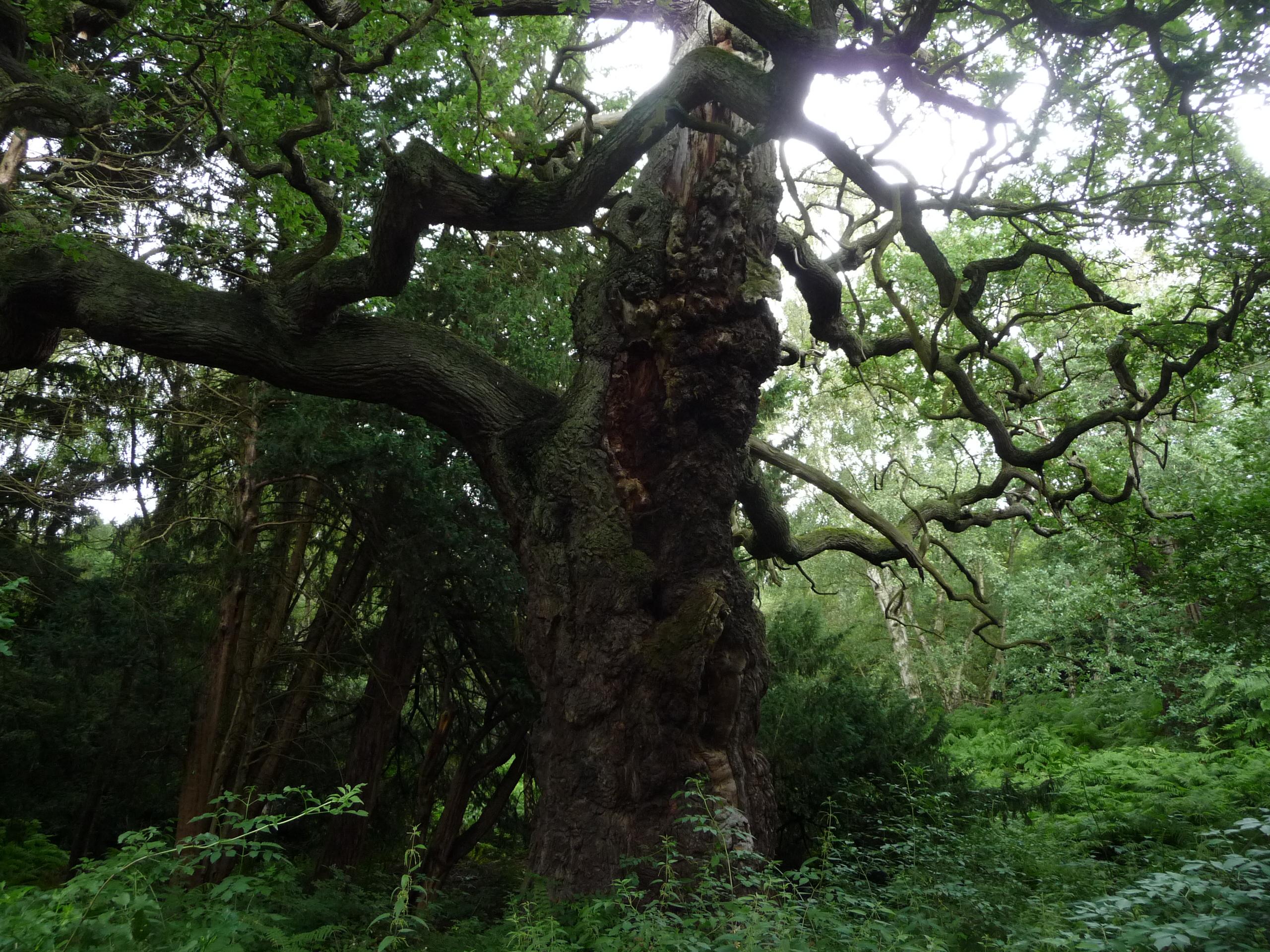 erdei élőhelyek az erdő találkozásánál)