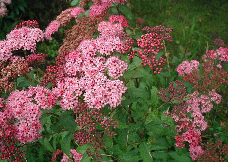 Flower Mound Med Spa Hours