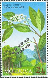 Stamp of Moldova md504.jpg