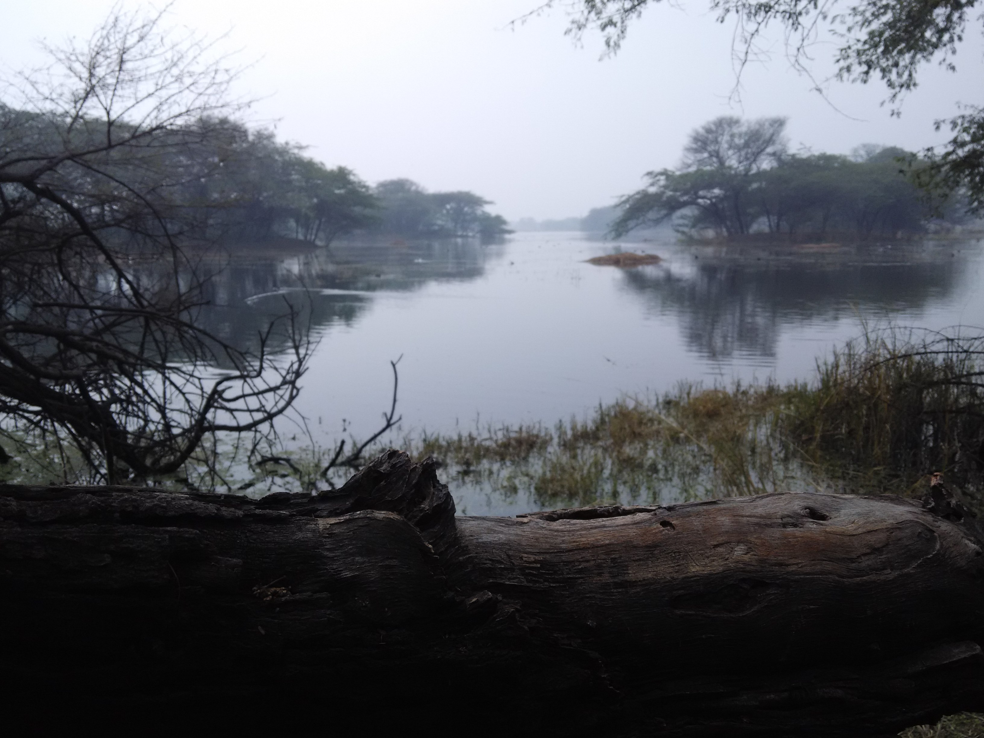 Sultanpur National Park - Wikipedia