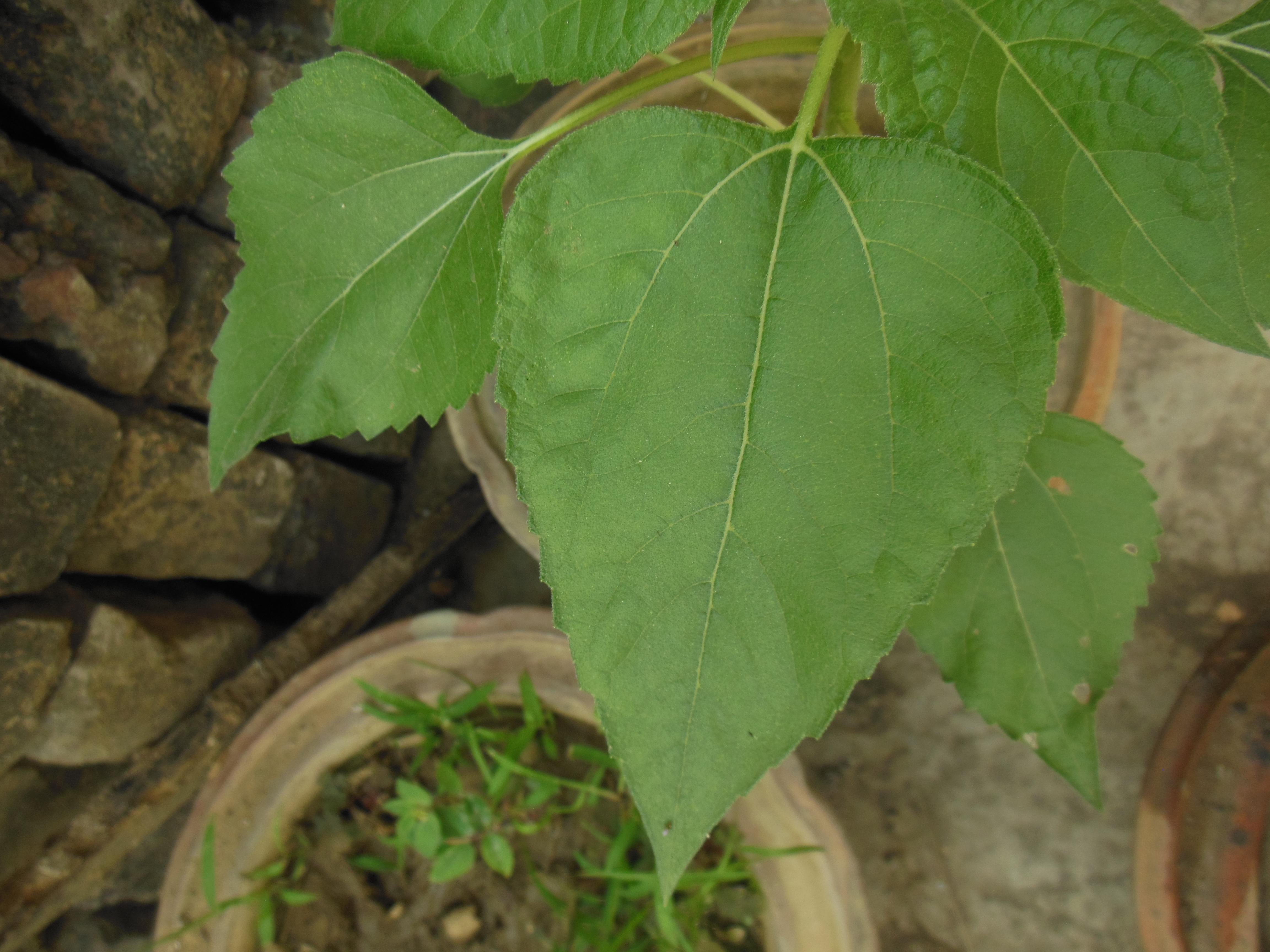 Image Result For South America Avocado