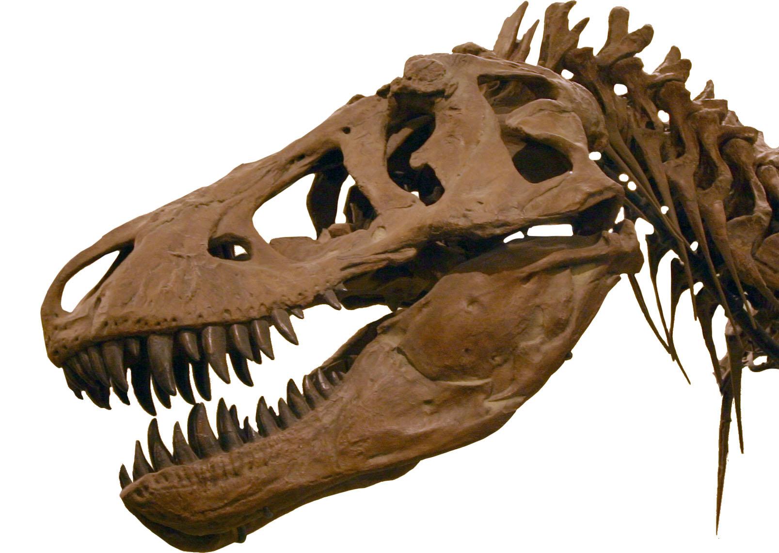 https://upload.wikimedia.org/wikipedia/commons/5/58/T-Rex2.jpg