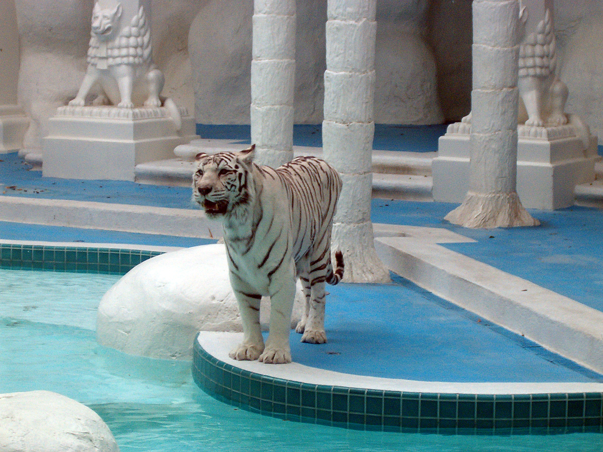 mirage casino white tigers