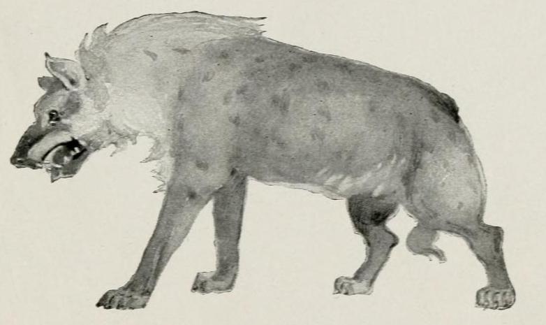 The Tree Dwellers (1904) Cave Hyena