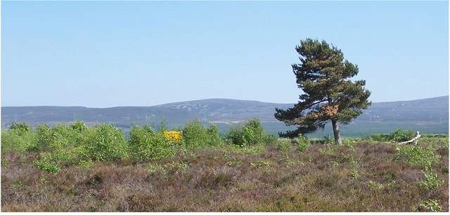 File:The loneliness of Culloden - geograph.org.uk - 1117123.jpg